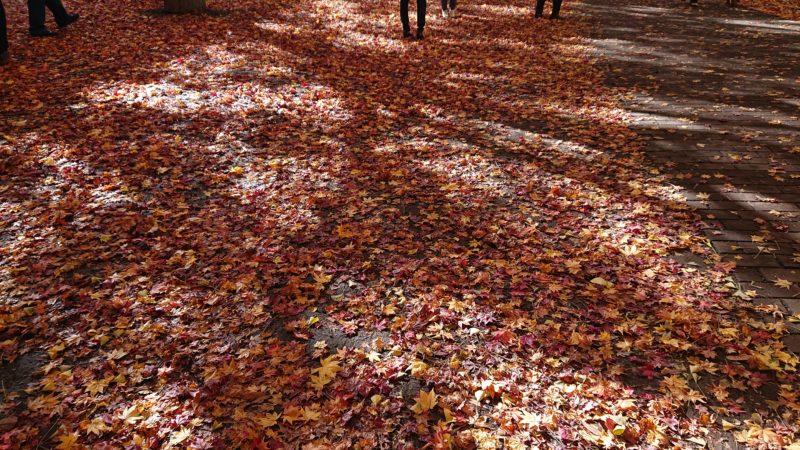 落ち葉も沢山