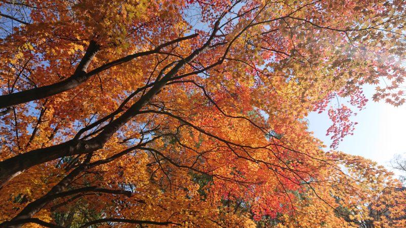 枝と葉が織りなす紅葉の美しさ