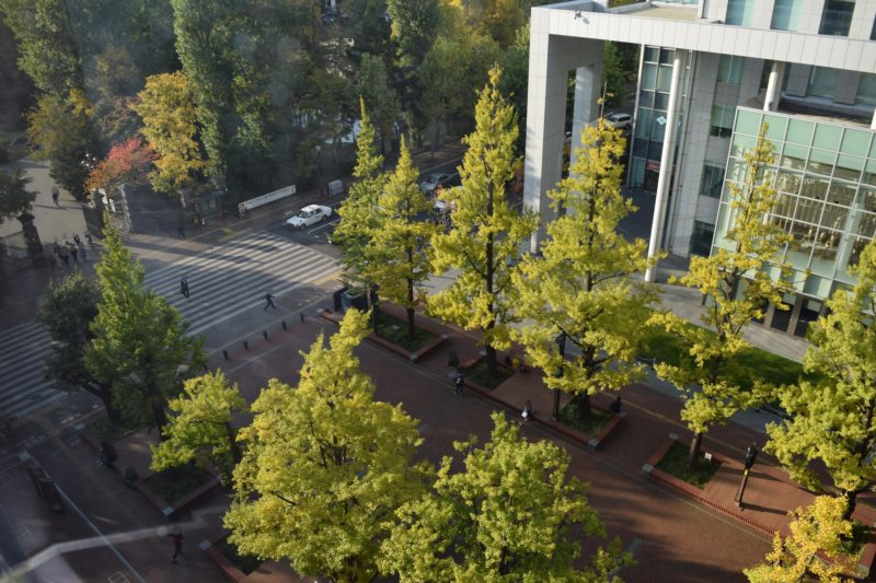 アカプラの赤れんが庁舎(北海道庁旧本庁舎)方面