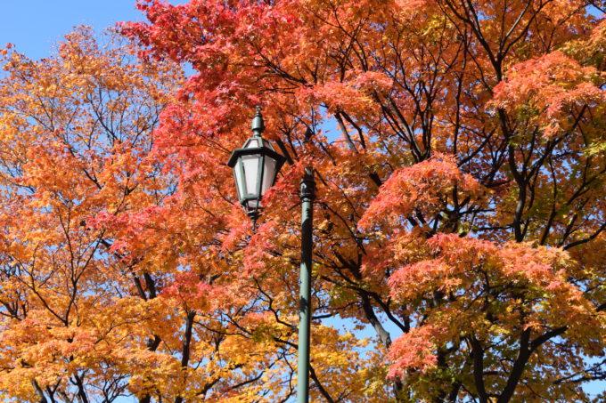 紅葉に包まれる街灯