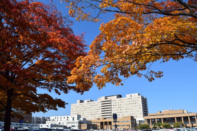 イチョウ並木のある北13条道路からの北海道大学病院