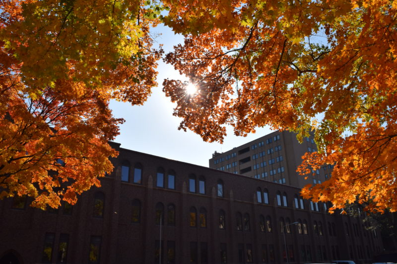 北海道大学総合博物館の紅葉・黄葉