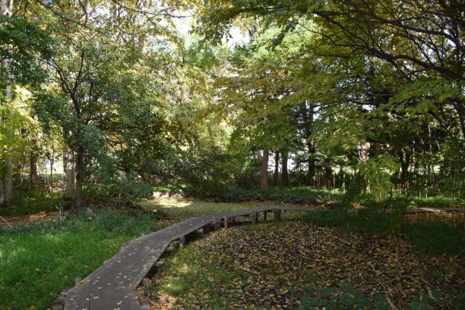 北海道大学花木園の園路