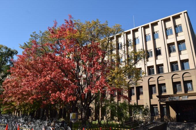 北海道大学理学研究院4号館前のナナカマドの紅葉