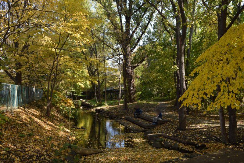 サクシュコトニ川の紅葉・黄葉