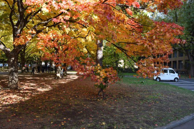 紅葉の葉が子供の手に届きます