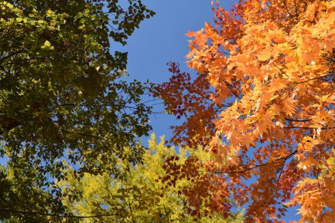 北海道大学紅葉