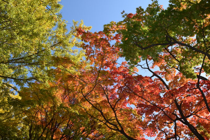 北海道大学の緑・黄・橙・黄と色づく葉