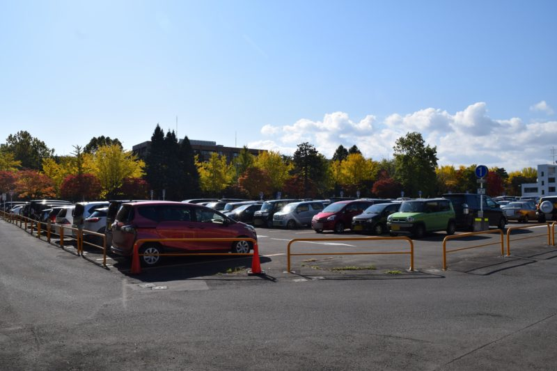 北海道大学病院駐車場付近からの北大イチョウ並木全体