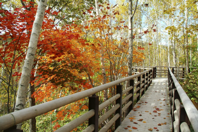 国営滝野すずらん丘陵公園の紅葉