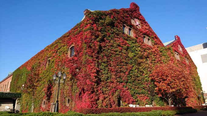 サッポロファクトリーレンガ館のツタ紅葉