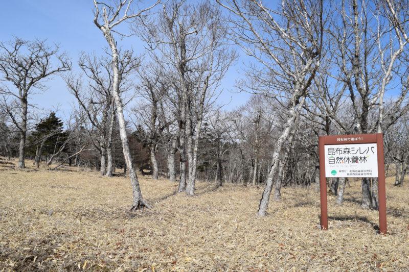 昆布森シレパ自然休養林